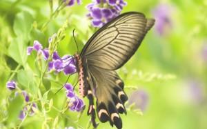 sommerfugl unni